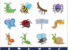 Kansas Kids Preschool Class Bugs and Insects at