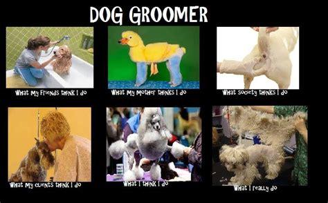 groomer safety irish groomer