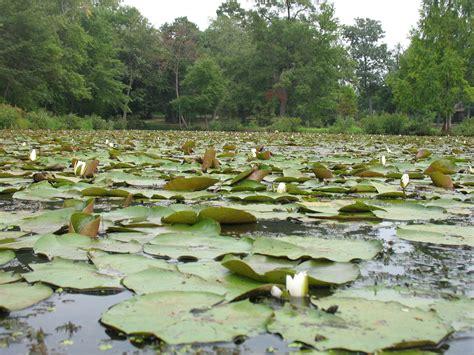kenilworth aquatic gardens kenilworth park and aquatic gardens