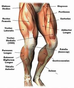 Leg Anatomy Diagram