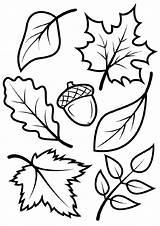 Coloring Fall Leaves Leaf Printable Template Sheets Autumn Adults Acorn Printables Vorlagen Scenes Templates Preschoolers Sheet Elegant Tree Adult Activity sketch template