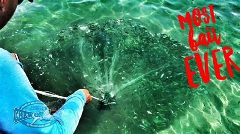 cast florida netting fishing bait fish most caught ever chew coast