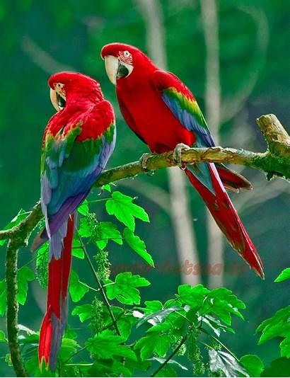 Parrot Painting Animals Diamond Landscape Birds Parrots