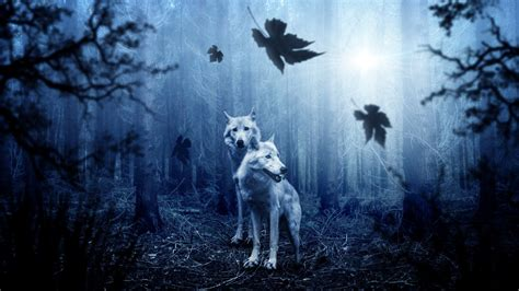 wallpaper wolves forest night hd  animals