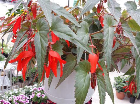 cuisine facile avec fleurir un balcon à l 39 ombre conseils et sélection de plantes