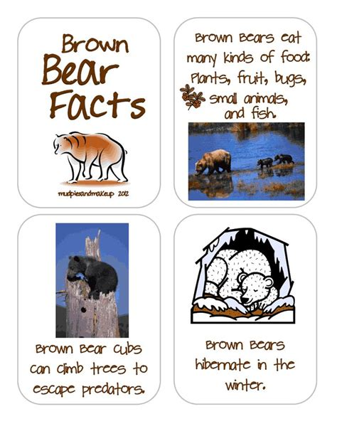 1000 images about bears and hibernation theme on 604 | 0f0a8b42cdb39535ff11bce7a700a402