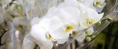 Come Curare Le In Vaso by Come Curare Le Orchidee In Vaso Una Piccola Guida Per