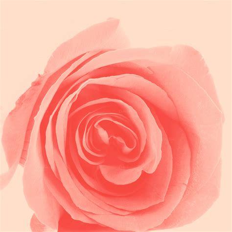 Pastel Rose ~ Nature Photos On Creative Market