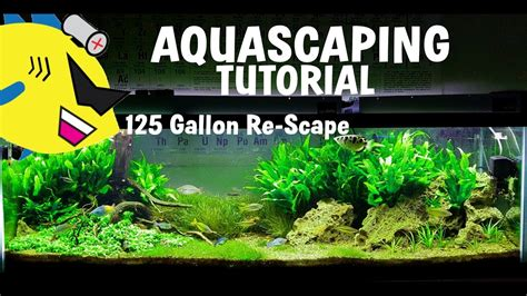 tutorial aquascape aquascaping tutorial how to aquascape 125 gal re scape