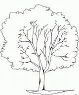 Coloring Tree Elm Colorear Ywn Plane Res Dibujos Imprimir Library sketch template