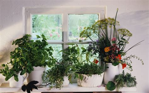 common mistakes  herb gardening