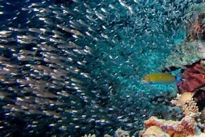 Besonders Auf Englisch : die malediven ein tropisches inselerlebnis ~ Buech-reservation.com Haus und Dekorationen