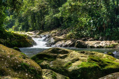 butterfly led pico bonito national park honduras stephen l tabone