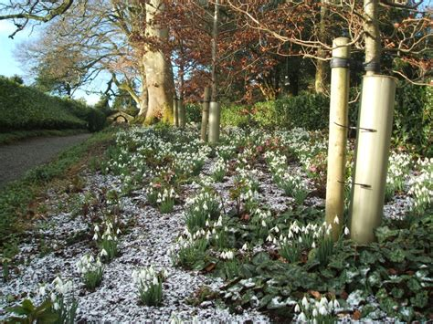 snowdrop gardens events archives page 2 of 2 carlow tourism
