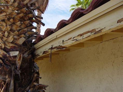 termite signs infestation phoenix az blue sky pest