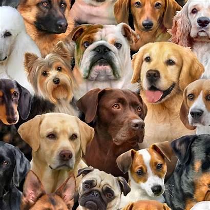 Dog Breeds Designer Ee