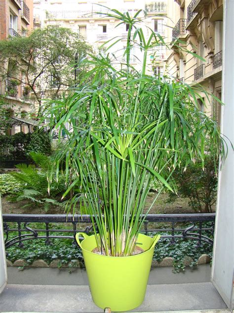 plante verte pour chambre plantes synthetiques pour exterieur 28 images plante