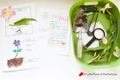 12 plant and seed learning activities for 762 | 11113423 366027243603077 1525092126476895716 n