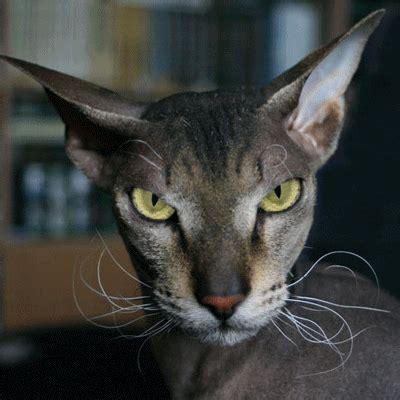 Evil Cat  Funny Myniceprofilecom