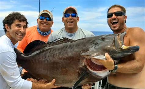 grouper record florida caught potential outdoorhub