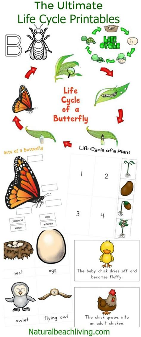 ultimate life cycle printables science activities