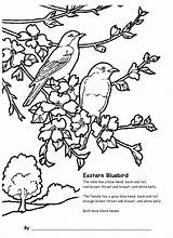 Bluebird Coloring Pages Eastern Grade 4th Children Bing Activities Bird Adults Bluebirds Animal Adult Sheets Birds  Drawings Designlooter Pdf sketch template