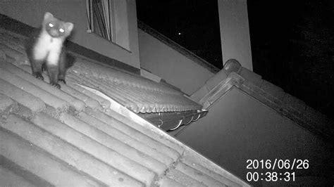 marder im dachboden marder auf und im dach teil 1