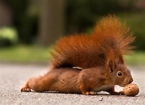 Eichhörnchen füttern Gartenzauber
