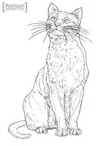 bay cat coloring page  printable coloring pages