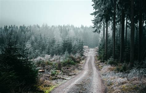 Wallpaper forest road trees nature Germany landscapes