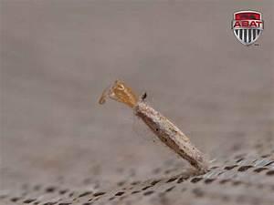Larve Mite Alimentaire : exterminateur de mites ~ Nature-et-papiers.com Idées de Décoration