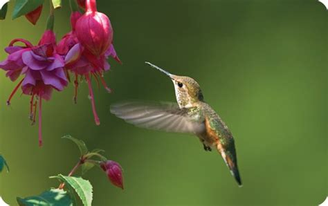 backyard bird shop locations hummingbirds birds unlimited birds unlimited
