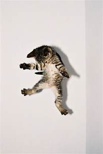 flying with a cat flying cat air cats