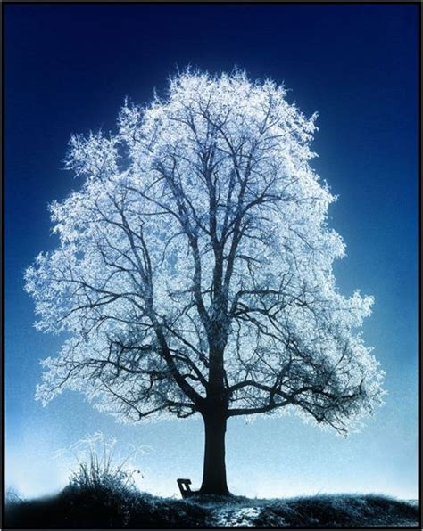 frosted tree trees pinterest