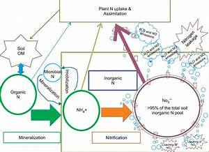 Nitrogen Cycle In Typical Agricultural Systems  I E