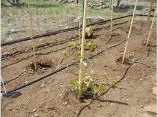 Garden Drip System Irrigation – gardenallie