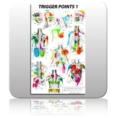 aok trigger point chart set sports fitness  exercise products