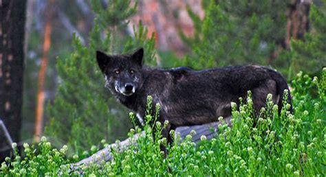reprieve   rockies defenders  wildlife