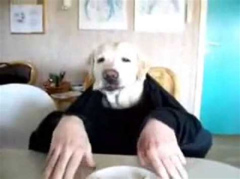 dog eating at table funny dog eating from the table youtube