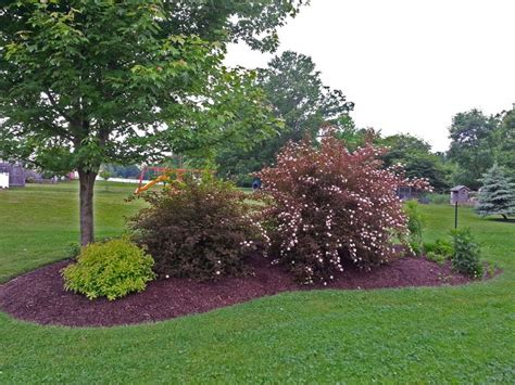 berm landscaping ideas 14 best images about debbies yard on pinterest gardens trees and shrubs