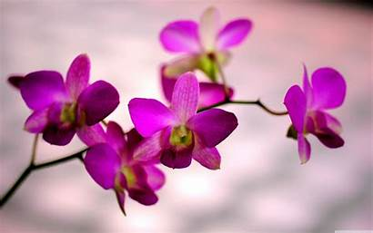 Orchid Flower Purple Spring Pink Natural Background