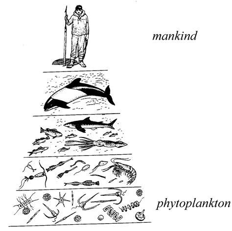 web cuisine diagram of food chain diagram free engine image