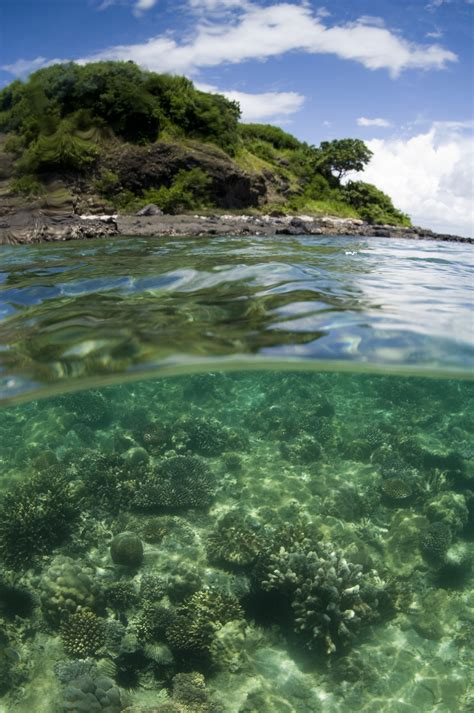 species study suggests mozambique channel  home    diverse coral reefs