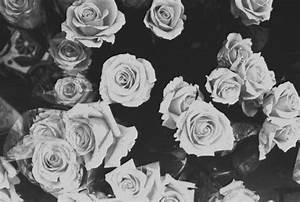 Images of tumblr backgrounds black and white roses golfclub white flowers tumblr 35 background hdflowerwallpaper mightylinksfo