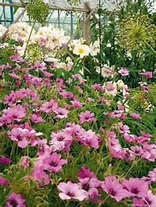 Plantes Vivaces Pour Massif : plantes couvre sol croissance rapide dans le jardin ~ Premium-room.com Idées de Décoration