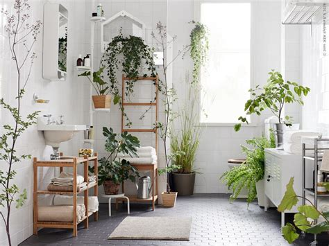 Decorating Our Homes With Plants-interior Design Explained