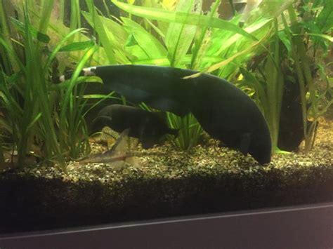 english forum switzerland view single post aquarium