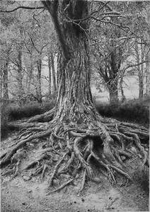 Tree drawing by ~absolutemadman on deviantART | Drawing ...
