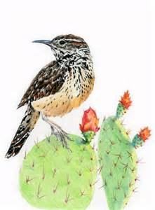 Pencil Cactus Wren Drawing