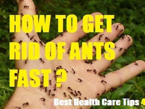 rid  ants   kitchen naturally